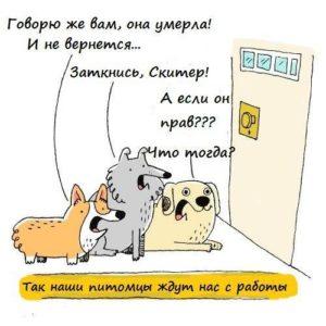 Собаки переживают расставание так же, как маленькие дети. Для них ушедший близкий - всё равно, что пропавший навсегда. Для животных и маленьких детей нет понятия времени