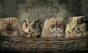 cats_and_owl