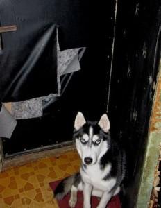 Когнитивные стратегии и воспитание собаки | Блог Елизаветы Павловой, психолога