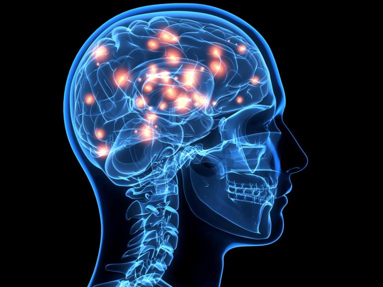 novye-svyazi-v-mozge-3