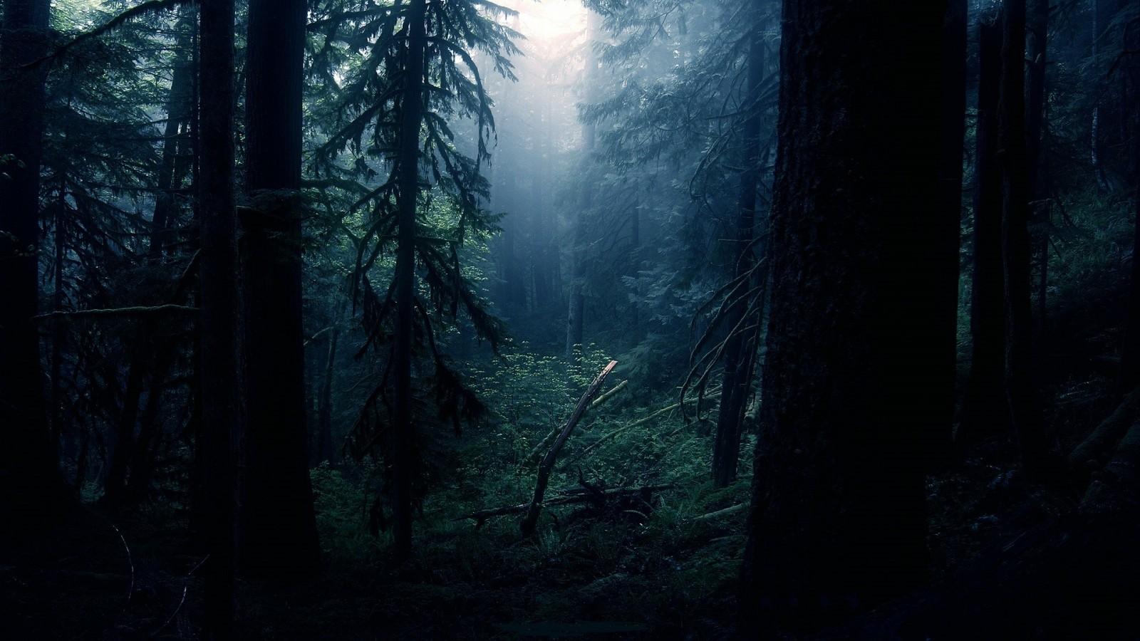 Психотерапия как выход из тёмного леса